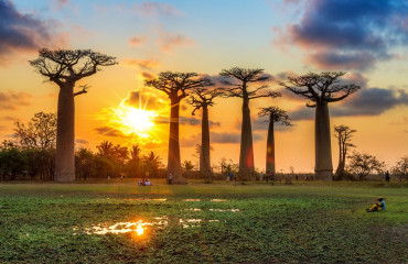 Árvore Baobab no Pôr do Sol