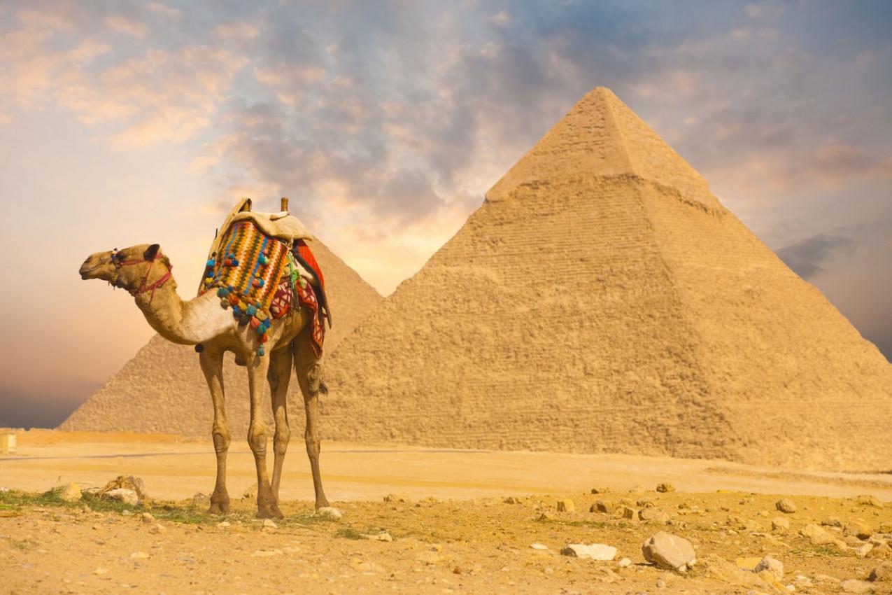 Camelo no Cairo Egito