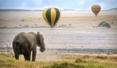 Elefante africano, balões de ar quente desembarque no fundo, Masai Mara National Reserve