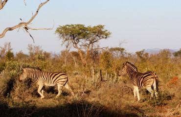 Safari ÁfrIca do Sul