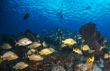 Peixes no lindo mar de Cozumel