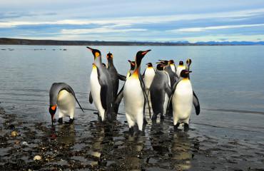 Pinguins na Terra do Fogo na Ushuaia