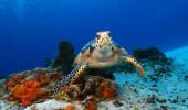 Linda tartaruga em Cozumel