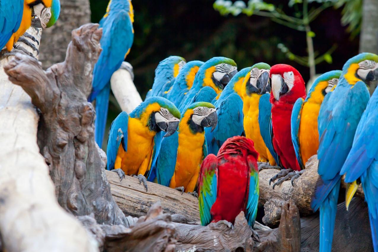 Araras Costa Rica