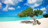 Aruba árvore Divi Divi