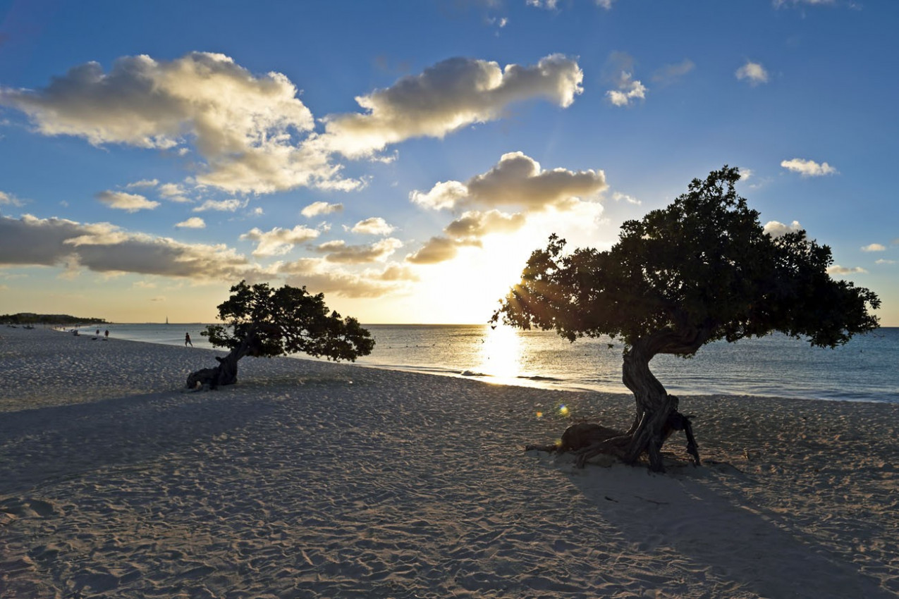 Árvore Divi-divi em Aruba