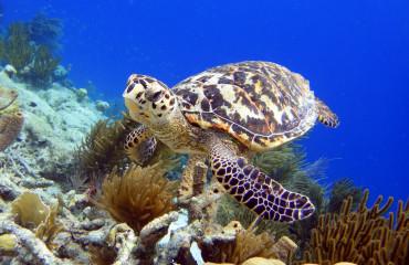 Tartaruga em Bonaire