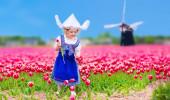 Campo de tulipas florescendo ao lado de um moinho de vento na região Amsterdam, Holanda