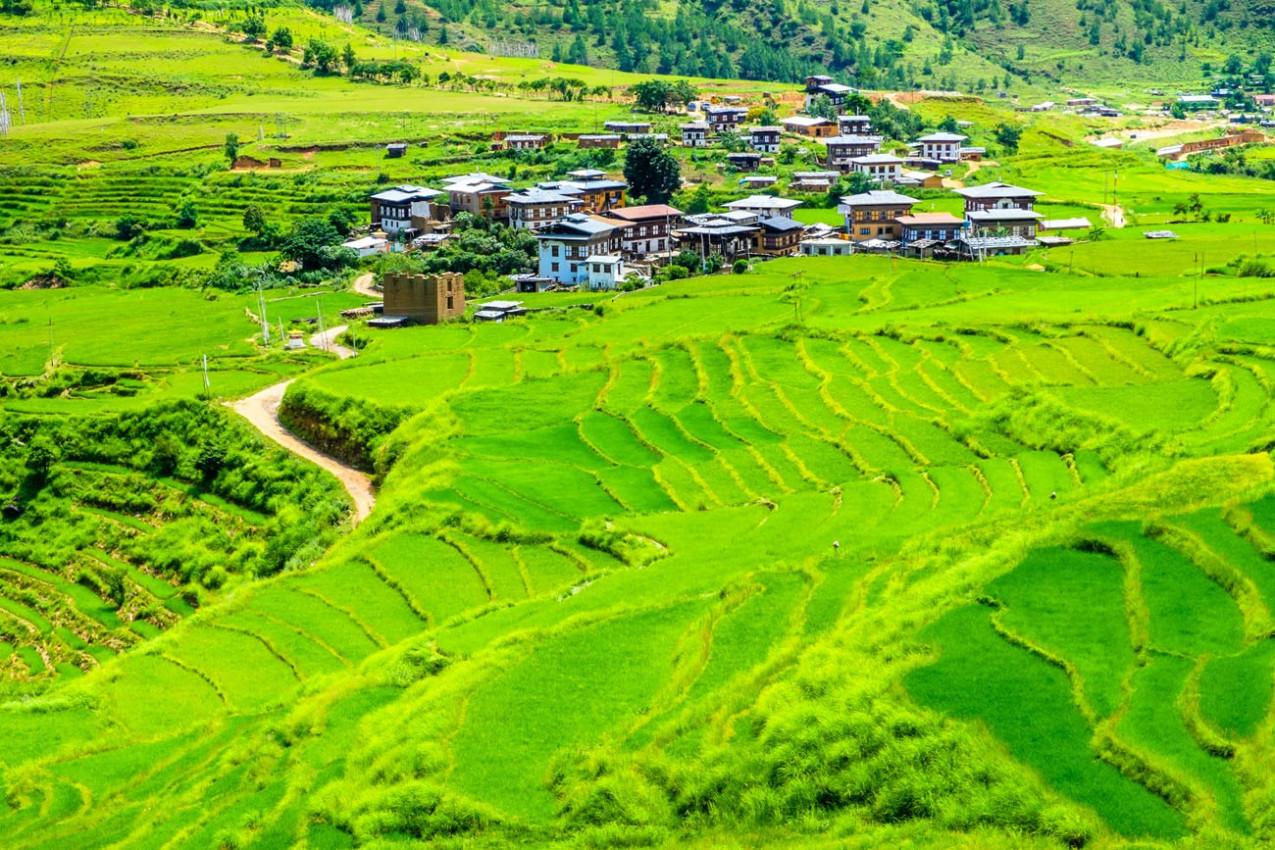 Linda vista dos campos de arroz no Butão