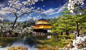 Sakura Templo de Ouro - Japão