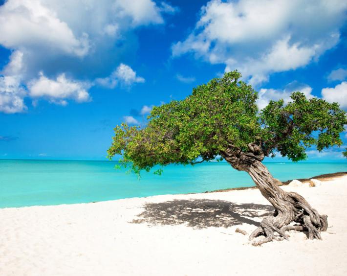 Divi Divi árvore simbolo de Aruba