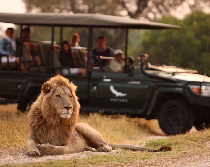 Botswana um Safári com Estilo
