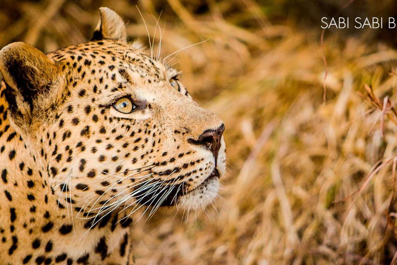 Viagem com criança para Safári na Africa do Sul