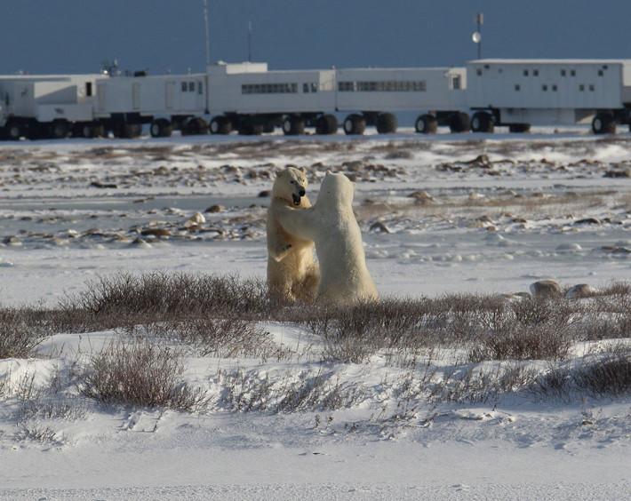 Aventura no Ártico